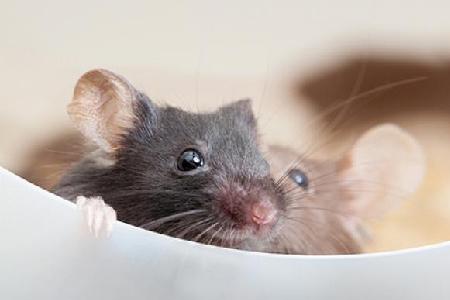 Mouse-Extermination